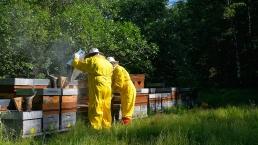Travaille dans l´un des ruches des Pyrénées