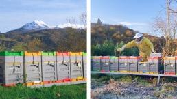 Images de nos colonies d'hiver dans les Asturies